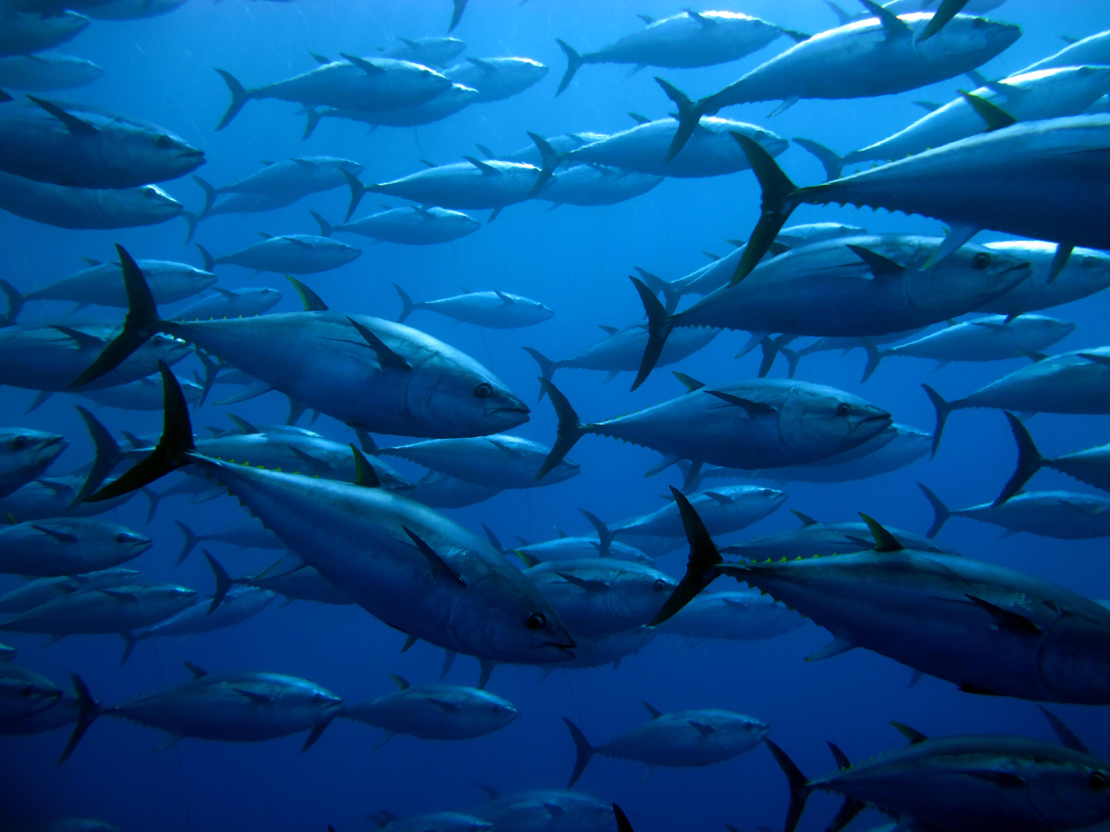 Shutterstock image - tuna