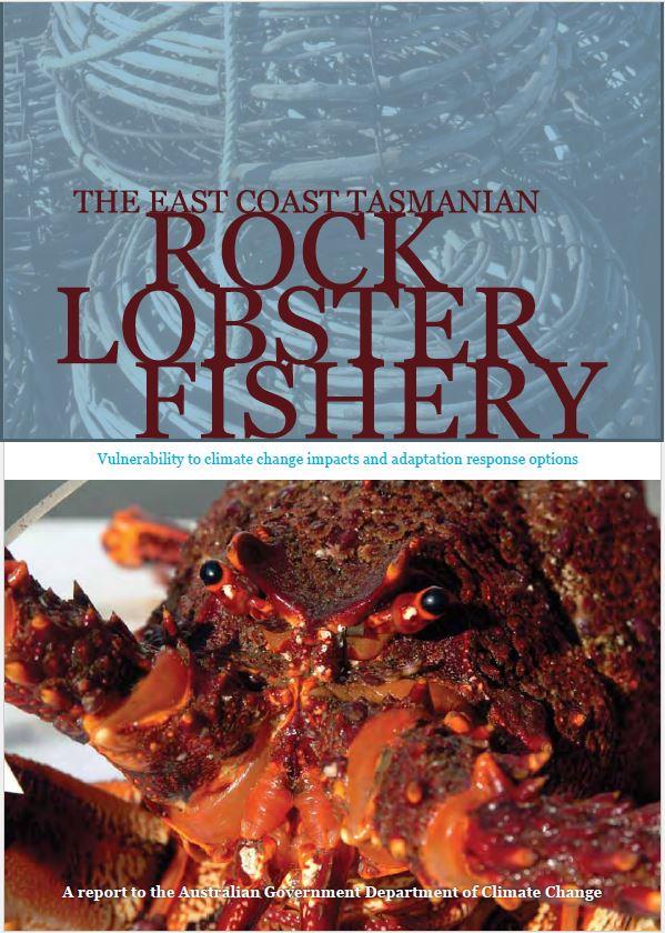 Rock lobster report