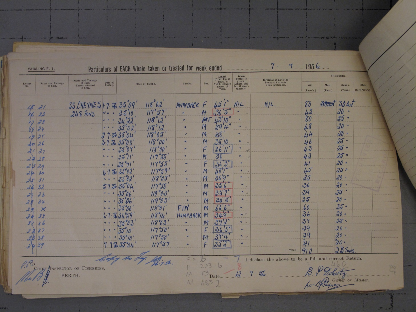 Cheynes Beach whaling station record from 1956