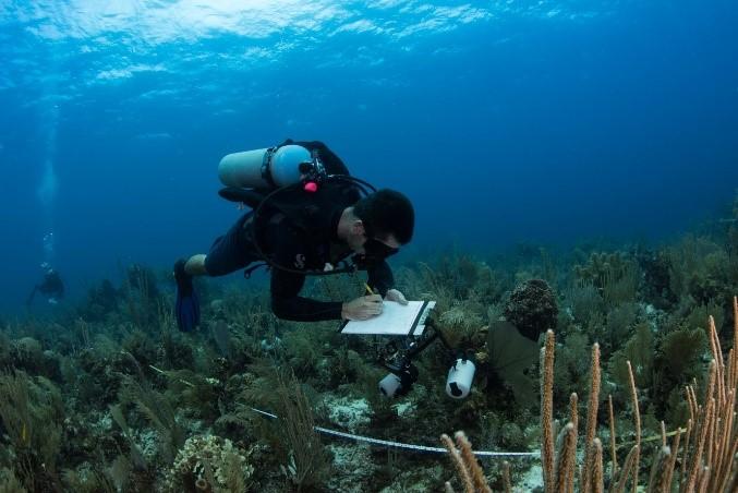 Reef Life Survey diver